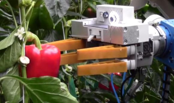 Robot, ktorý dokáže mechanickou rukou zozbierať úrodu paprík.