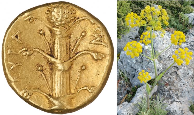 Rímska minca s feniklom